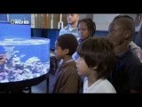 Fishtank kings - Короли аквадизайна. Аквариум мечты.